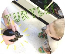 little boy looking at turtle in PetSmart, summer activities for kids