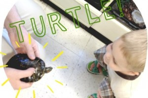 little boy looking at turtle in PetSmart, summer activities for kids