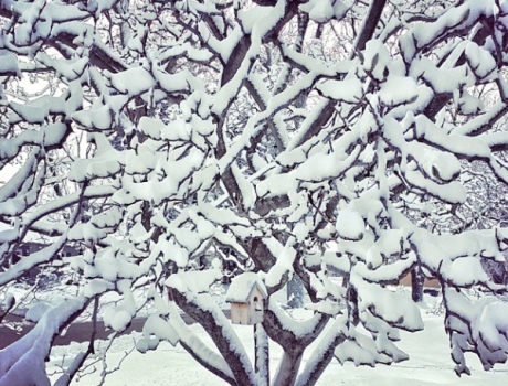 snowy tree in winter